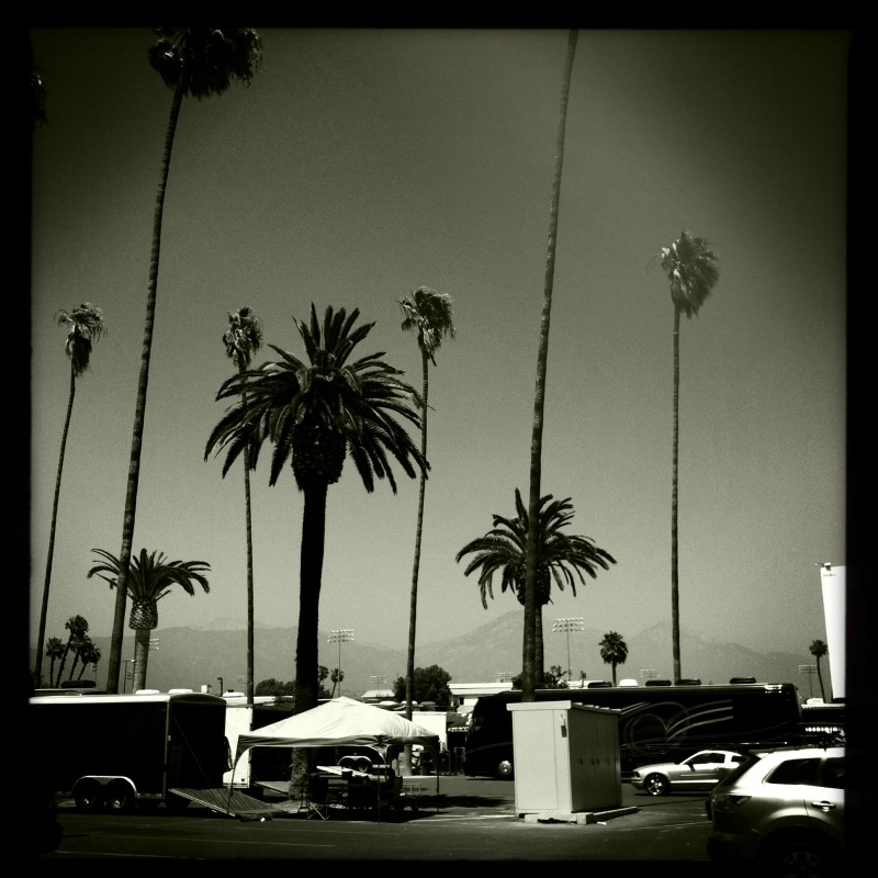 Palm Trees B+W - Photo By: Mike Reiersen